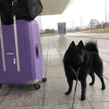 dog entering airport
