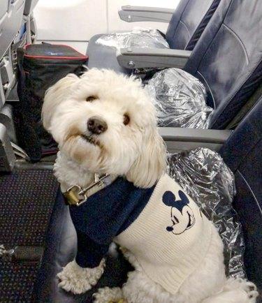 dog sitting in airplane seat