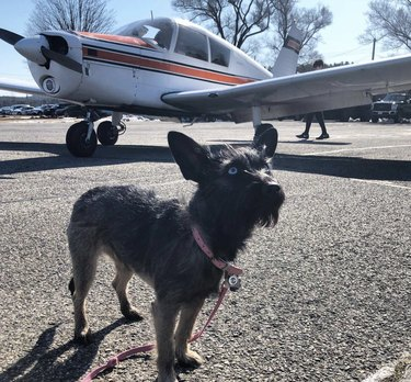 dog standing by small plane