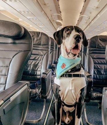 dog in airplane aisle