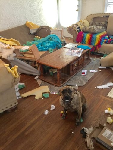 dog tears up living room