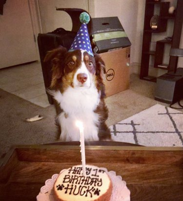 dog in party hat with cake