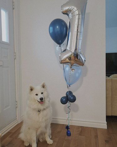 dog with balloon shaped like number 1