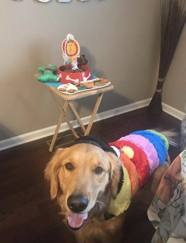 """dog in birthday clothes with """"cake"""""""