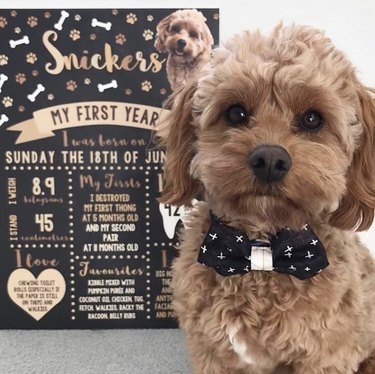 dog next to birthday info card
