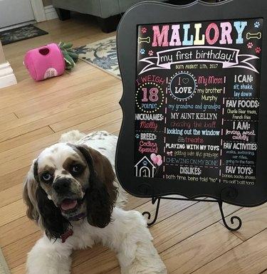 dog next to her birthday info card