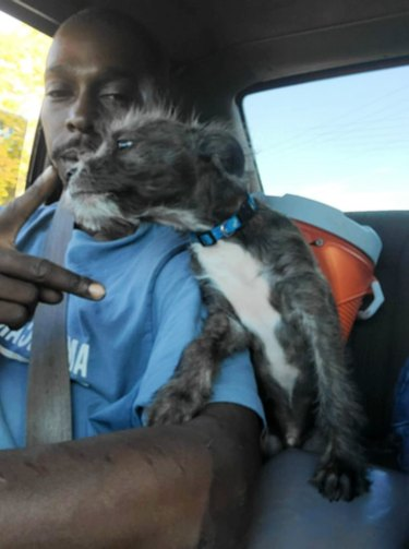 dog in car with human