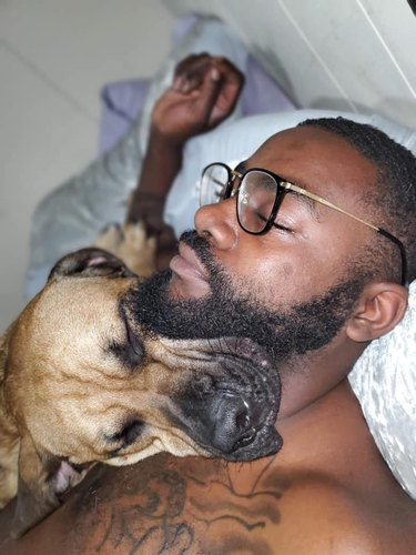 big dog sleeps on human