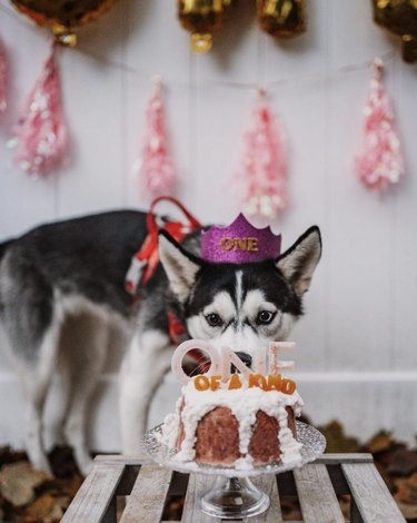 dog in party hat in front of cake