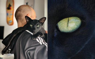 black cat with panther green eyes