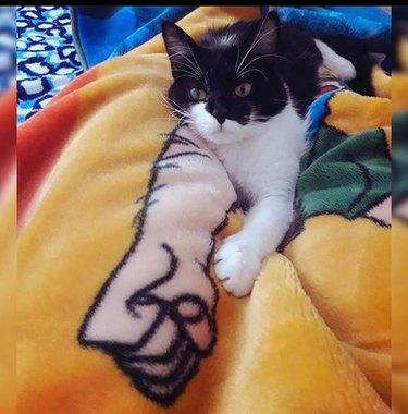 cat on funny blanket