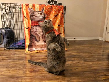 cat stands on hind legs