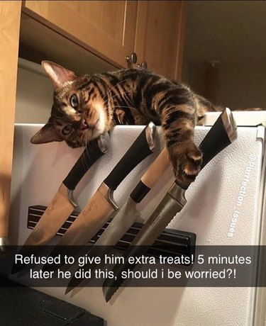 cat has paws on kitchen knife