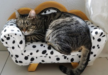Cat sleeping on miniature couch