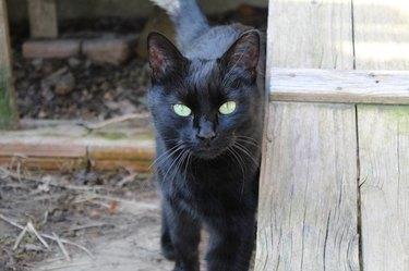 Black cat in a barn