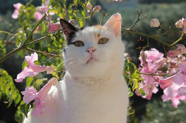 Cat posing with pink flowers
