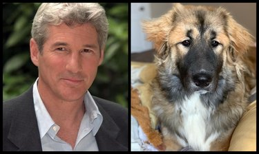 dog looks like Richard Gere
