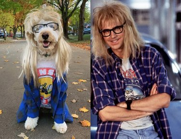 dog looks like Garth from Wayne's World