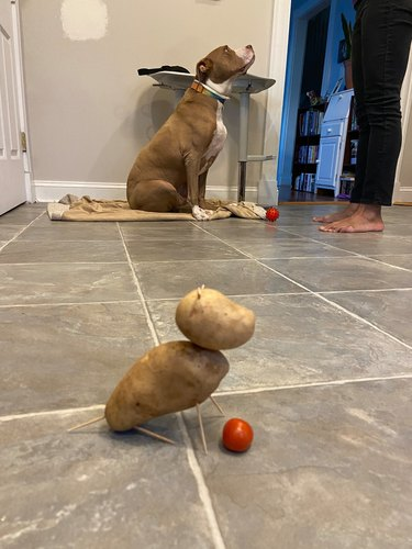 dog looks like potato