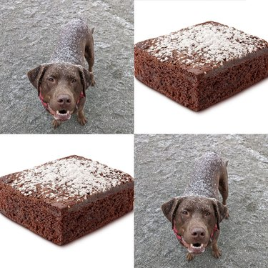 dog looks like brownie