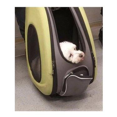 dog in carrier on train floor
