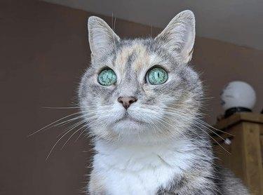 tabby cat with alien eyes
