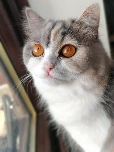 cat with orange eyes