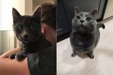 gray cat with black saucers for eyes