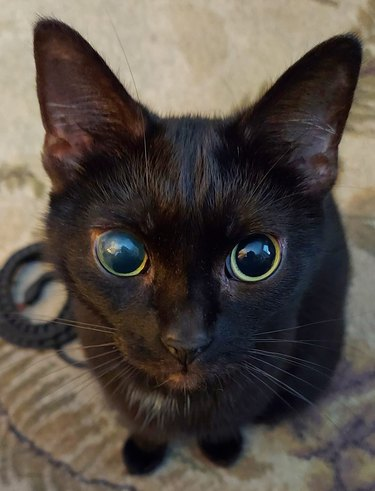 black cat with black eyes
