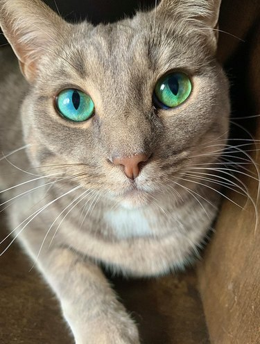 cat with green emeralds for eyes