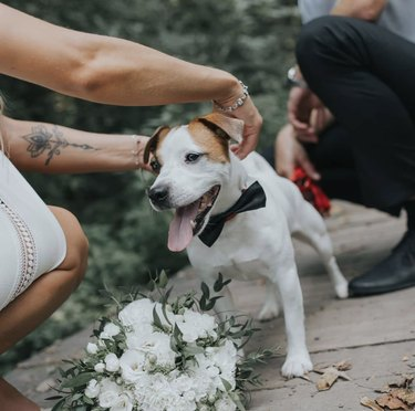 dog being pet by bride
