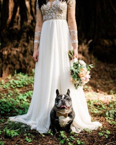 dog sitting by bride
