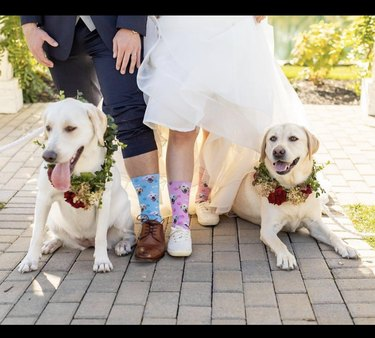 two dogs next to bride and groom