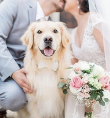 dog sitting by kissing bride and groom