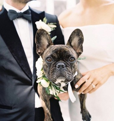 dog held by bride and groom