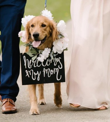 dog walking with bride and groom