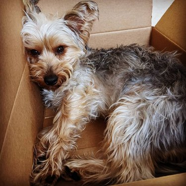 dog relaxing in box