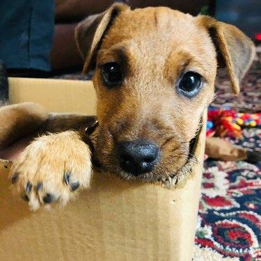 puppy looks cute in box