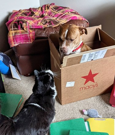 cat looks at dog in box