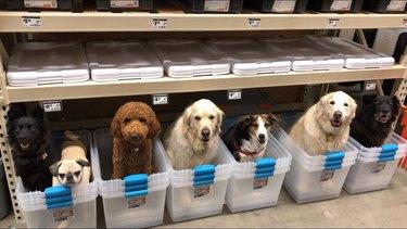 7 dogs in 7 plastic bins