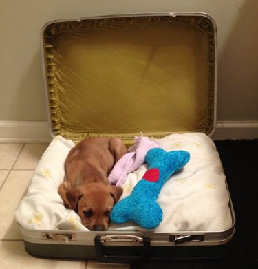 puppy sleeping in suitcase