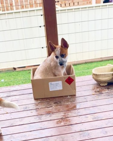 dog in box on picnic table