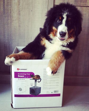 dog leans box to one side like race car driver