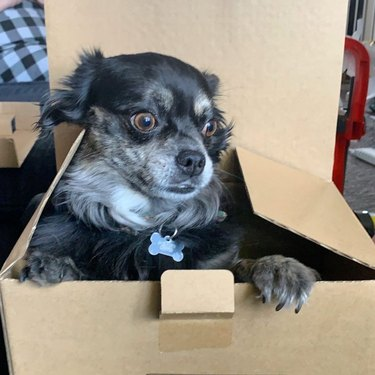 dog pokes head out of box but doesn't like what he sees