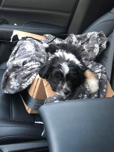 dog napping in blanket ox