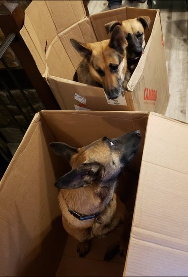 dogs hanging out in boxes