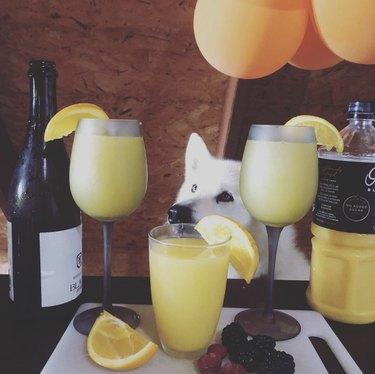 dog serving mimosas