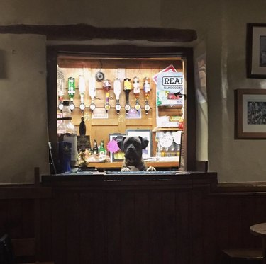 dog standing in front of bar