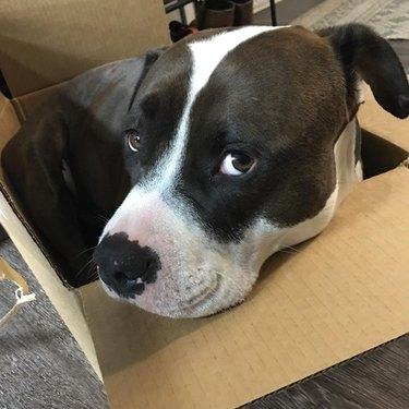 dog in box seems pretty happy with himself