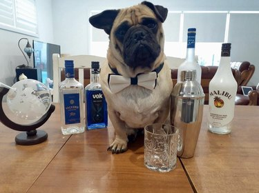 dog serving Malibu rum